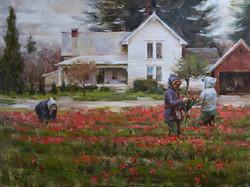 Mitch Baird - Tulip Harvest