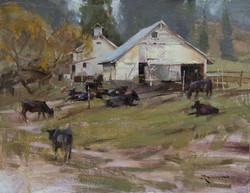 Mitch Baird - Stock Barn