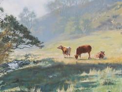 David Barber - Sunlit Pastures