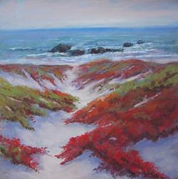 Jacquelyn Blue - Asilomar Dunes in Bloom
