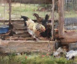 Kyle Ma - Chicken Coop