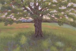 Susan Whiteman - Under the Old Tree