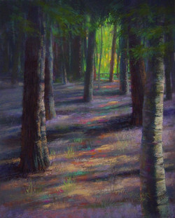 Jude Tolar - Festival of Trees and Light