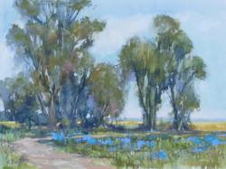 Kris Buck - Blueberry Fields