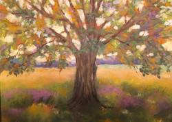 Susan Whiteman - Under the Old Tree in Autumn