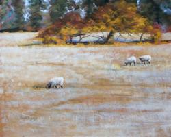 Sandy Byers - Frosted Woolley Fields