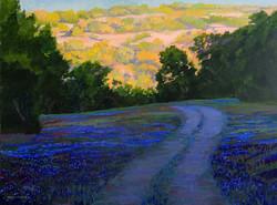 Nancy Paris Pruden - Sunrise Bluebonnets