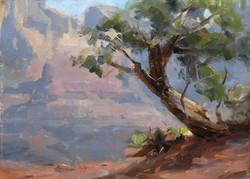 Dave A. Santillanes - Sedona Cedar.jpg