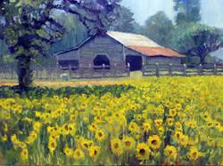 Ed Cahill - Sunflower Farm