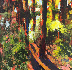 Holly Friesen - Forest Light