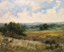 J.R. Cook - November Wildflowers
