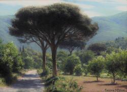 Joseph McGurl - Study of Stone Pines With Morning Haze (plein air)