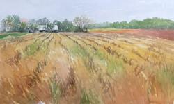 Jane Ramsey - Old Farm on Swan Creek Road