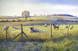 Michael Salt - Spring Lambing