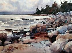 Brienne M Brown - Maine's Rocky Shores