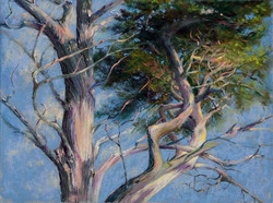 Cindy Kopenhafer - West Coast Tree II