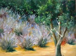 Donna Pierce-Clark - Lavender Fields