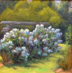 Tamar Rudavsky - Heavenly Hydrangeas