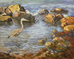 Diane Mannion - Heron In Tidepool