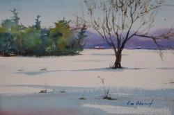 Jim Oberst - White Carpet