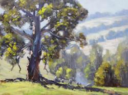 John Rice - Above the Crudine River
