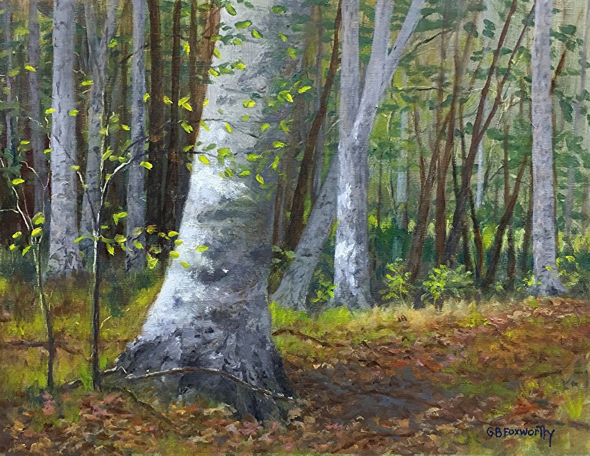 Bruce Foxworthy - Beech Forest in Hastings, MI