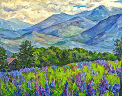 Irina A. Pisarenko - Lupines, Sugar Hill, New Hampshire
