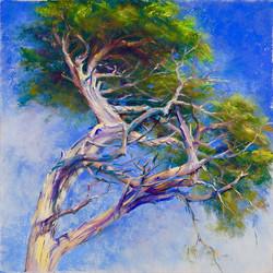 Cindy Kopenhafer - West Coast Tree I