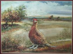 Monika Niżyńska - Pheasant
