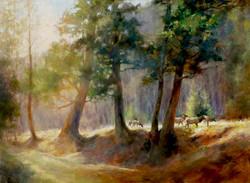 Susan Blackwood - Among the Trees.jpg