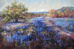 Judy Gelfert - Bluebonnet Trail