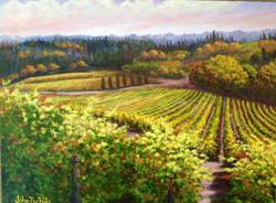 John Nichols - Oregon Vineyard