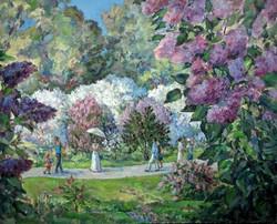 Irina A. Pisarenko - Blossom Lilac in Boston Arboretum