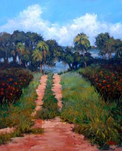 Sharon Repple - Lakeside Orange Grove