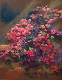 Jude Tolar - Hot Pink Paradise
