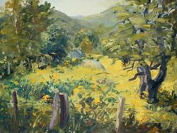 Douglas Howe - Field of Goldenrod