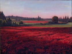 Michael Orwick - Crimson Clover.jpg