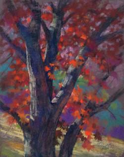 Jude Tolar - Shumard Oak