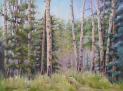 Donna H. Branson - Aspen Forest