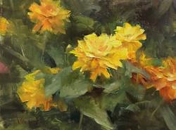 Kyle Ma - Yellow Zinnias