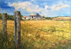 Anthony Saldutto - Summer at the Farm