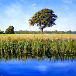 Michael Salt - Summer Stillness