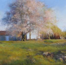 Florence Penouty - Plum Blossom