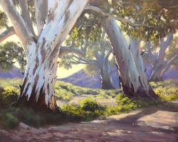 John Rice - Flinders Giants