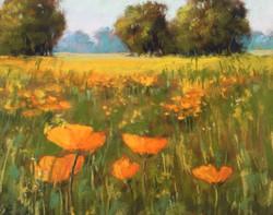 Sherri Cassell - Ojai Meadows