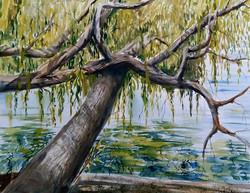 Claudia Artzmann - Willow at the Lake