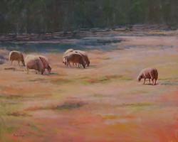 Marsha Hamby Savage - Morning Sheep