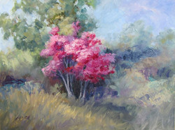 Nellie Gill - Redbud in March