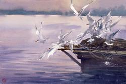 Konstantin Sterkhov - Seagulls Pier