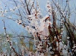 Gelena Pavlenko - Apricot Tree in Bloom